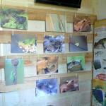 exposition-amphibiens-2015-22